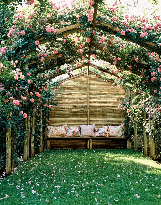 A pergola with climbing roses
